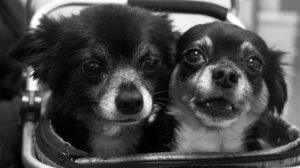 Pair of puppies