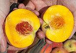 peach seeds