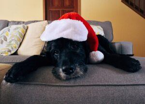 Dog with Santa hat