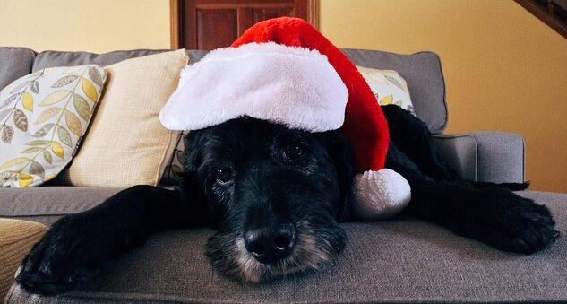Dog with Santa hat