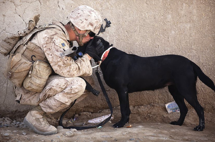 Soldier and military Service Dog
