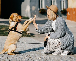 Dog and woman giving high five.